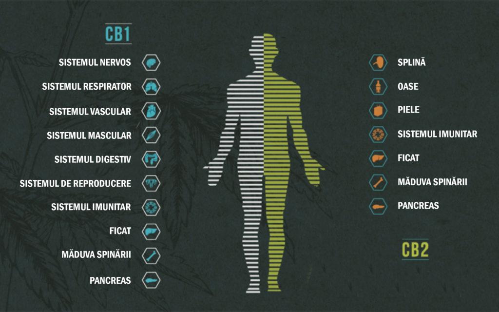 simptome pierderea în greutate de epuizare nu este suficientă pierdere în greutate