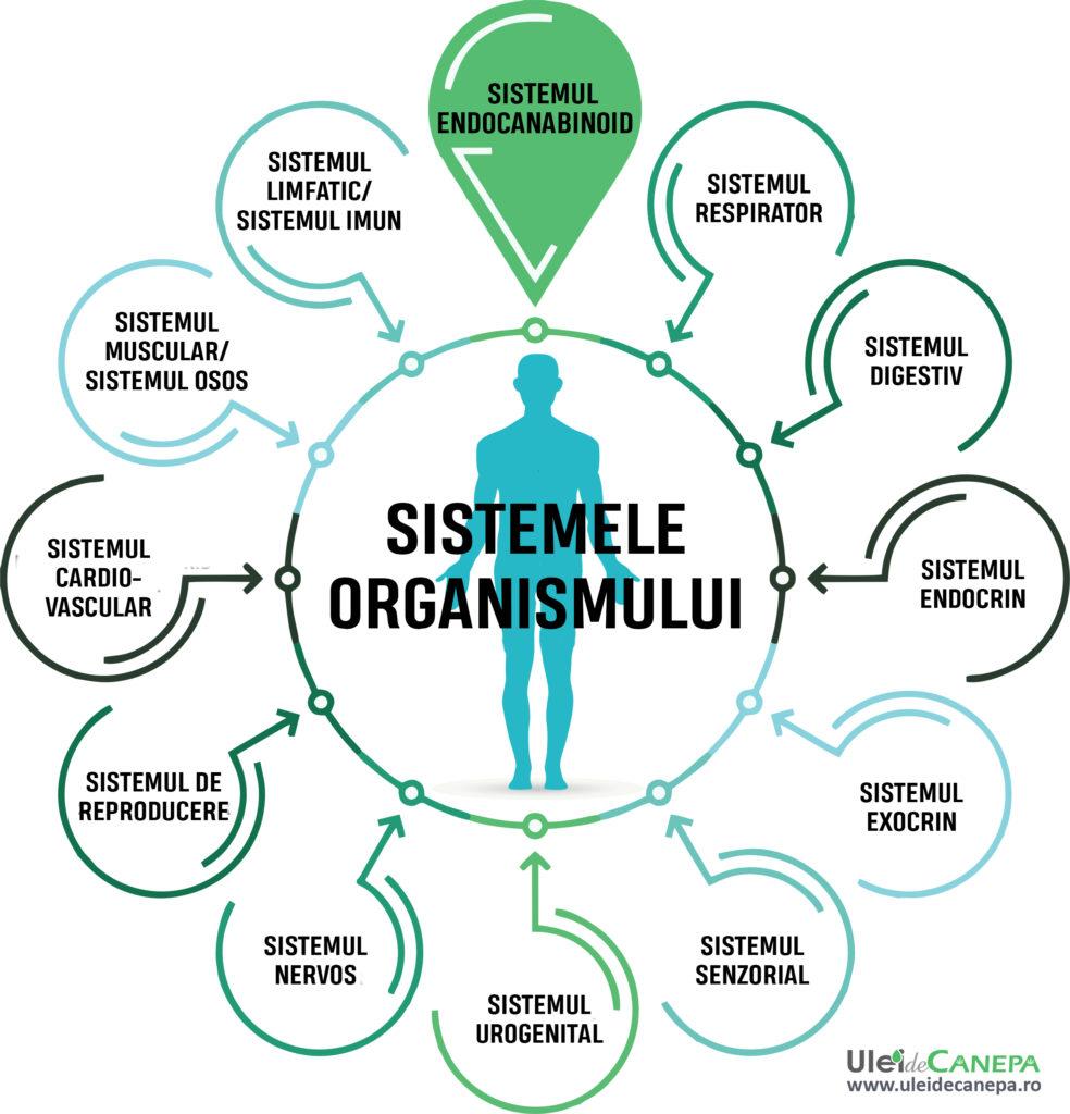 sistemele organismului