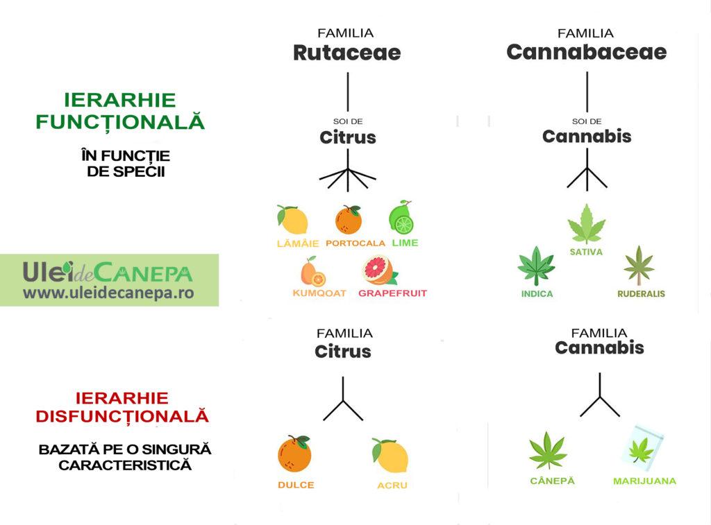 canepa si marijuana