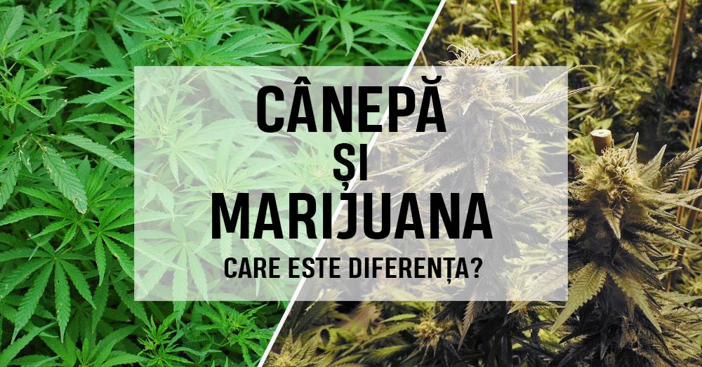 marijuana studiu de greutate